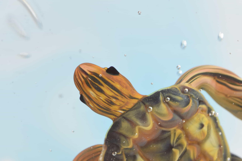 Turtle acquarium