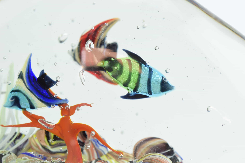 Acquarium with fishes